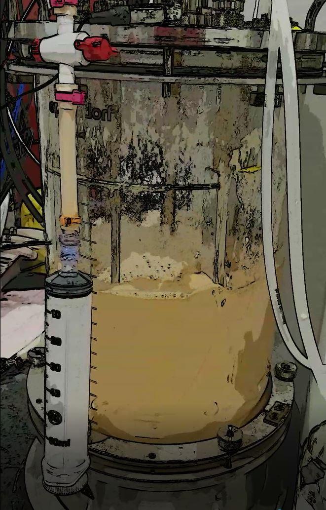 fermenting.jpg