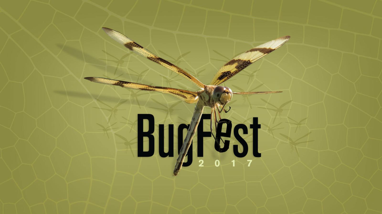 BugFest2017